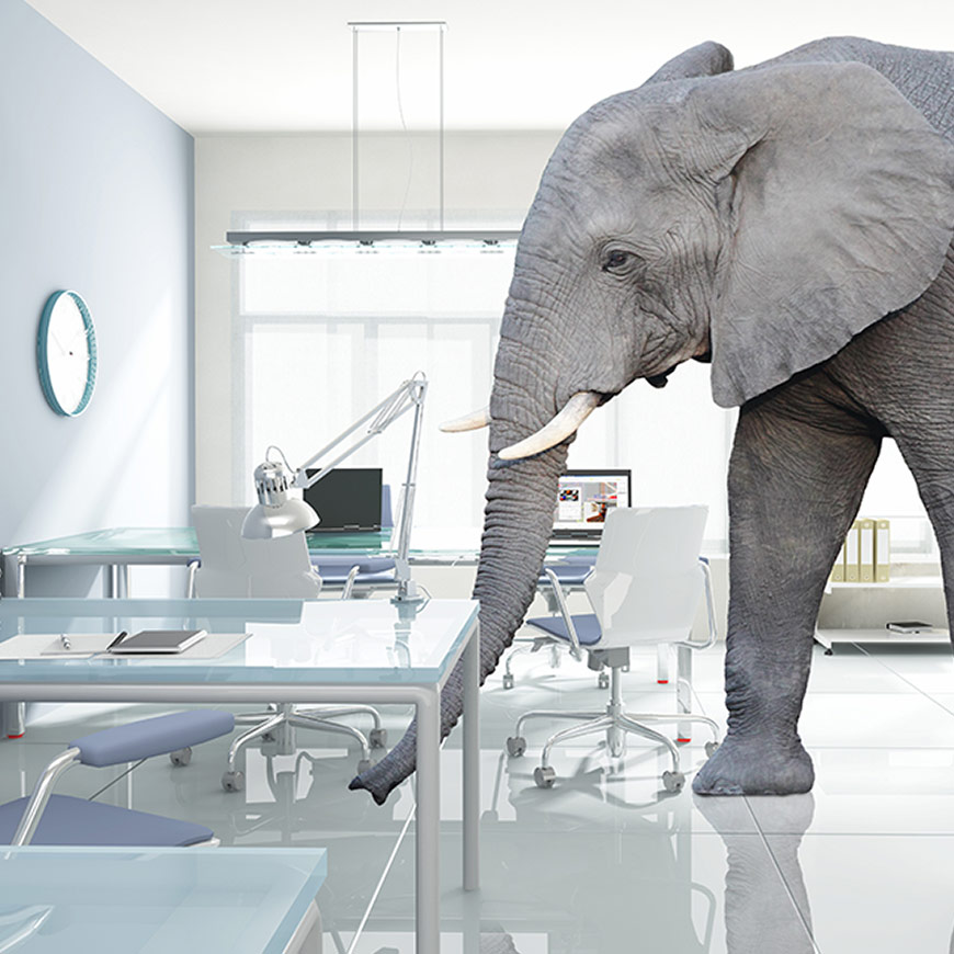 elephant in the room digital marketing